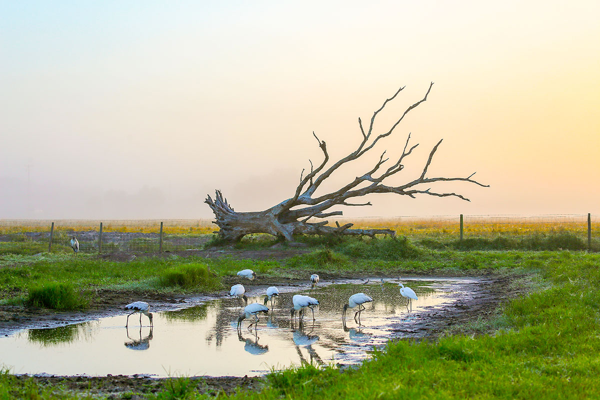Robbie Adams received a photography award for this photo of birds at a watering hole in his Back Country feature appearing on the last page of every issue of Indian River Magazine.