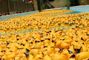 The Great Duck Derby successfully raises funds for Treasure Coast Community Health