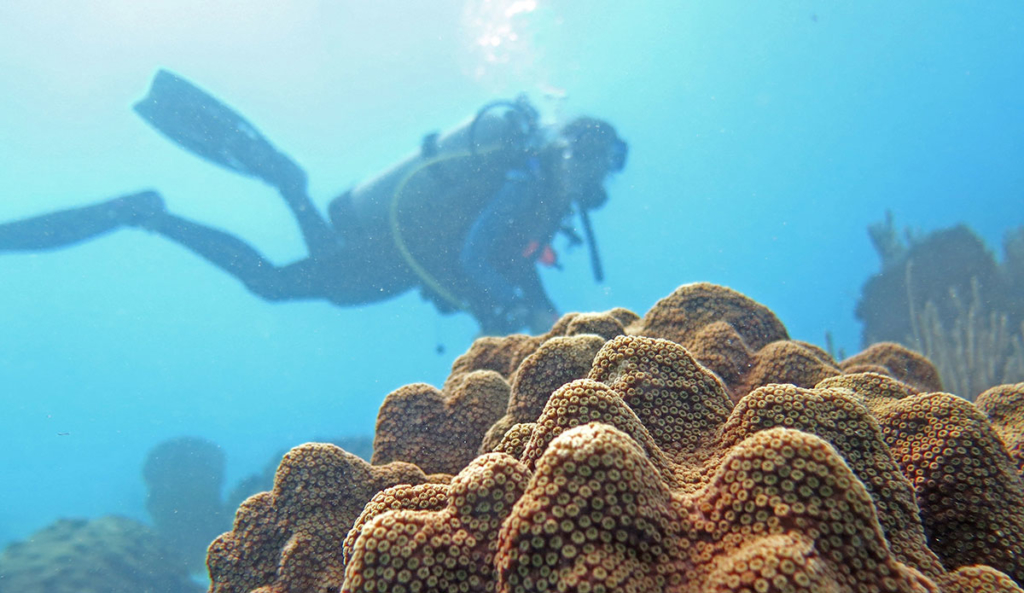 diver is collecting tissue samples