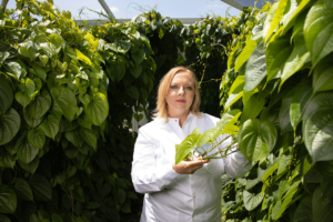 UF scientist itneracts with plants